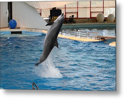 Dolphin Show - National Aquarium In Baltimore Md - 1212263 Metal Print by DC Photographer