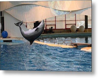 Dolphin Show - National Aquarium In Baltimore Md - 1212265 Metal Print
