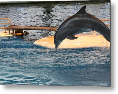 Dolphin Show - National Aquarium In Baltimore Md - 121227 Metal Print by DC Photographer