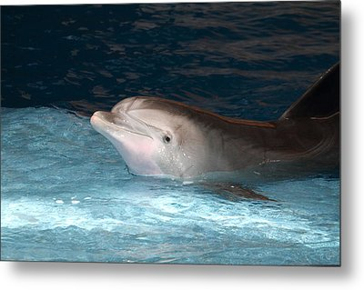 Dolphin Show - National Aquarium In Baltimore Md - 121232 Metal Print by DC Photographer