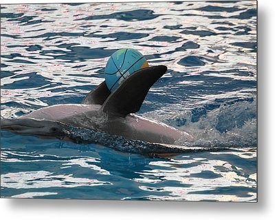Dolphin Show - National Aquarium In Baltimore Md - 121234 Metal Print by DC Photographer