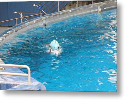 Dolphin Show - National Aquarium In Baltimore Md - 121236 Metal Print by DC Photographer