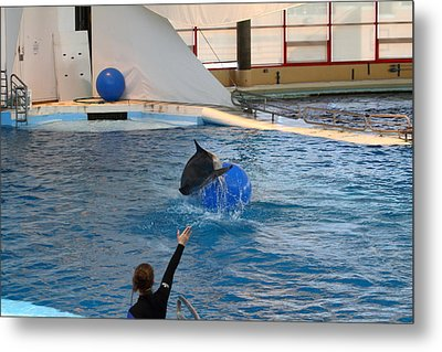 Dolphin Show - National Aquarium In Baltimore Md - 121241 Metal Print by DC Photographer