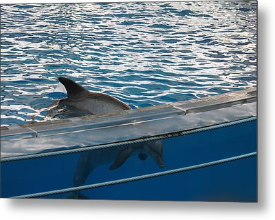Dolphin Show - National Aquarium In Baltimore Md - 121248 Metal Print by DC Photographer
