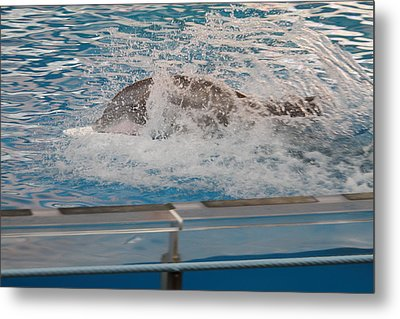 Dolphin Show - National Aquarium In Baltimore Md - 121249 Metal Print by DC Photographer