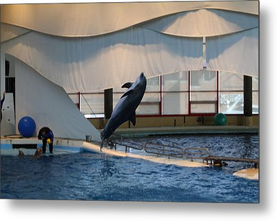 Dolphin Show - National Aquarium In Baltimore Md - 121256 Metal Print by DC Photographer