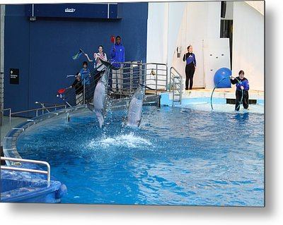 Dolphin Show - National Aquarium In Baltimore Md - 121291 Metal Print by DC Photographer