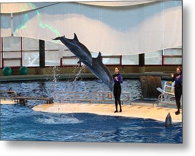 Dolphin Show - National Aquarium In Baltimore Md - 121294 Metal Print
