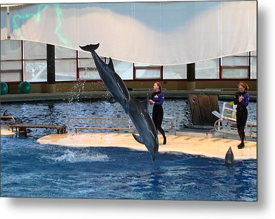 Dolphin Show - National Aquarium In Baltimore Md - 121295 Metal Print by DC Photographer