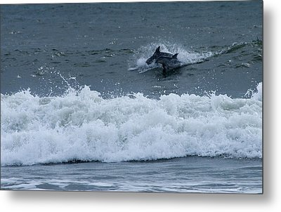 Metal Print featuring the photograph Dolphins At Play by Greg Graham