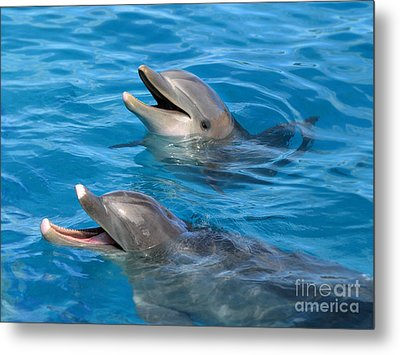 Metal Print featuring the photograph Dolphins by Kristine Merc