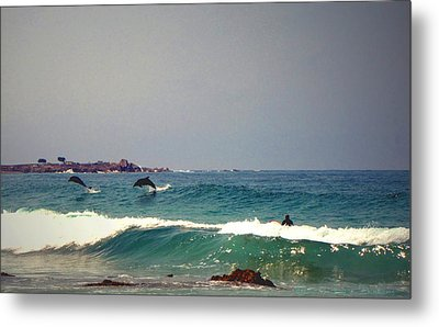 Dolphins Swimming With The Surfers At Asilomar State Beach  Metal Print