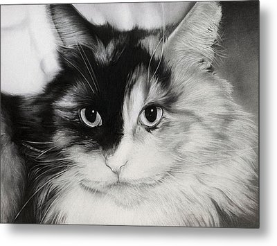 Metal Print featuring the drawing Domestic Cat by Natasha Denger
