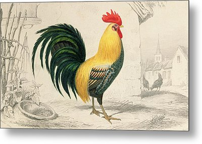 Domestic Cock Metal Print by Edouard Travies