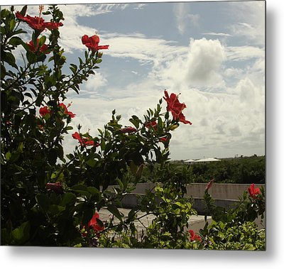 Dominican Red Flower Metal Print by Mustafa Abdullah