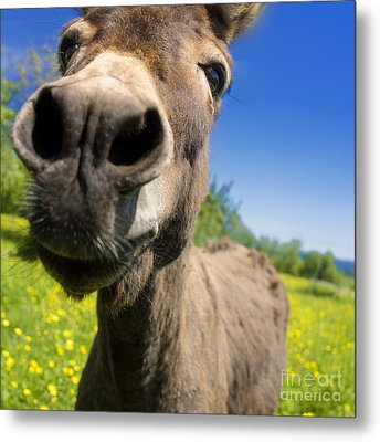 Donkey Metal Print by Bernard Jaubert