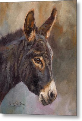 Donkey Metal Print by David Stribbling