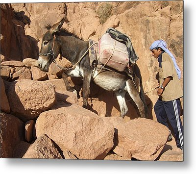 Donkey Of Mt. Sinai Metal Print