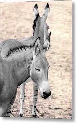 Donkeyflected Metal Print by Bill Tiepelman