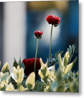 Don't Be Ranunculus Metal Print