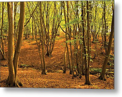 Donyland Woods Metal Print by David Davies