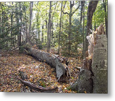 Door Bluff Headlands Cp Fallen Tree Metal Print by Jim Baker