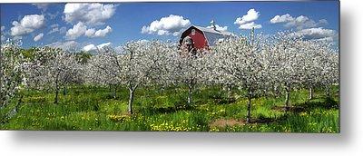 Door County Cherry Blossoms Panorama Metal Print