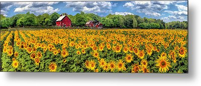 Door County Field Of Sunflowers Panorama Metal Print by Christopher Arndt