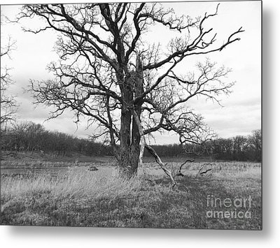 Dormant Beauty Bw Metal Print