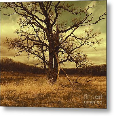 Dormant Beauty Metal Print
