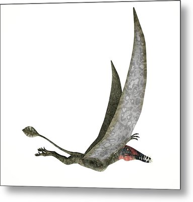 Dorygnathus Dinosaur Metal Print