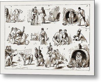 Dosing A Dog, 1883 1. Our St. Bernard Showed Symptoms Metal Print