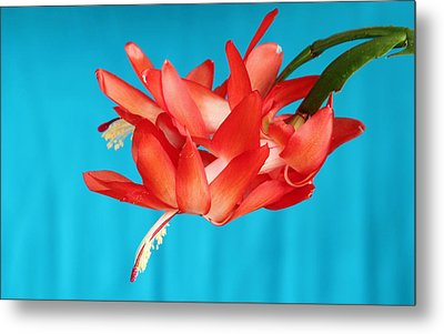 Double Bloom In Red Metal Print by E Faithe Lester