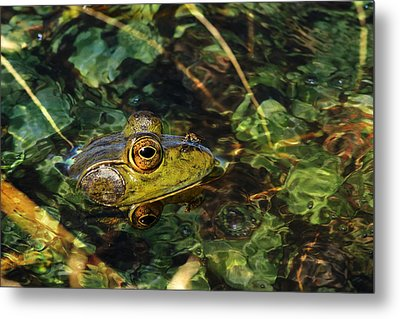 Double Dare Ya Metal Print by Donna Kennedy