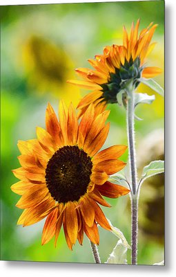 Double Dose Of Sunshine Metal Print by Jordan Blackstone