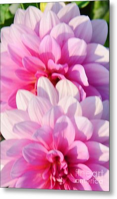 Double Pink Metal Print by Kathleen Struckle