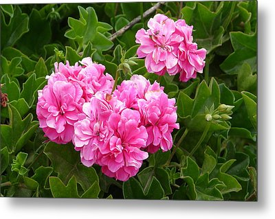 Metal Print featuring the photograph Double Pink by Lew Davis