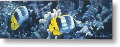 Double Saddleback Butterflyfish Metal Print by Randall Scott