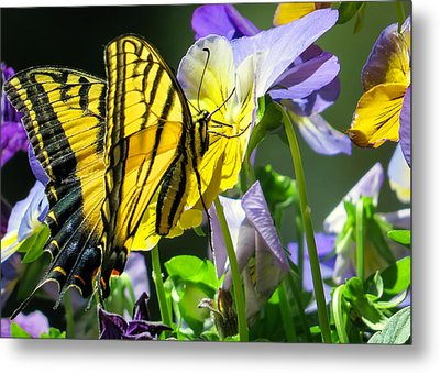 Double-tailed Swallowtail Buftterfly Metal Print