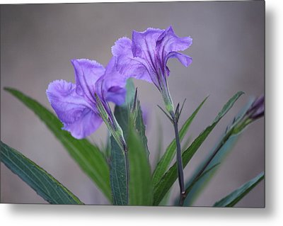 Metal Print featuring the photograph Double The Pleasure by Penny Meyers