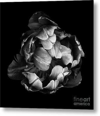 Double Tulip Metal Print by Oscar Gutierrez