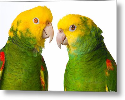 Metal Print featuring the photograph Double Yellow-headed Amazon Pair Portrait by Avian Resources