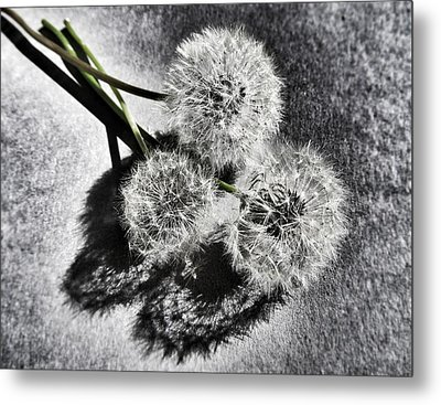 Doubled Wishes Metal Print by Marianna Mills