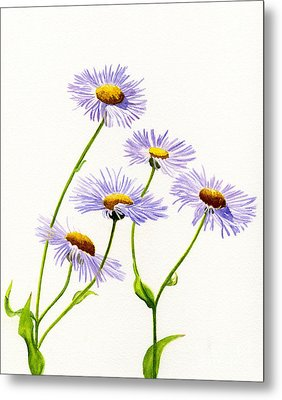 Douglas Aster Wild Flower Metal Print by Sharon Freeman