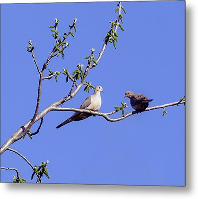 Metal Print featuring the photograph Doves by David Lester