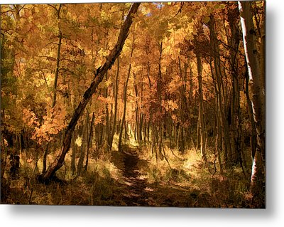 Down The Golden Path Metal Print by Donna Kennedy