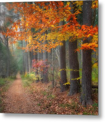 Down The Trail Square Metal Print by Bill Wakeley