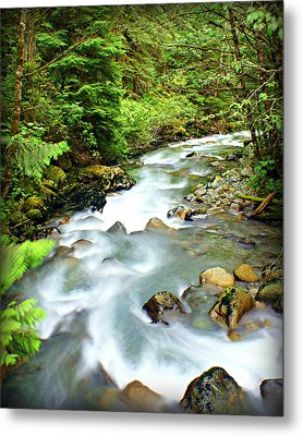 Downstram In The Olympics Metal Print by Marty Koch