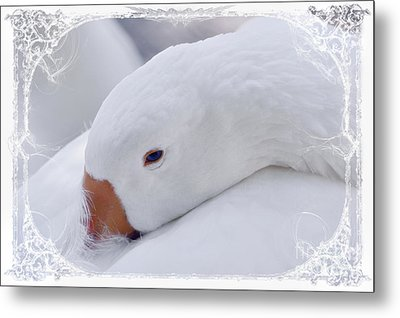 Downy Soft Mother Goose Metal Print by Elaine Manley