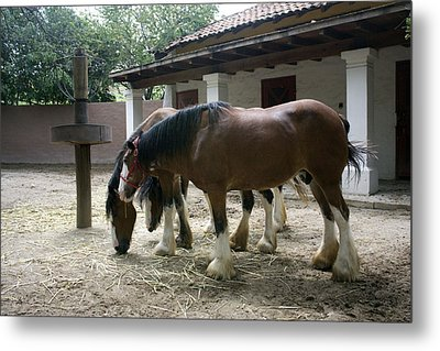 Draft Horses Metal Print by Lynn Palmer